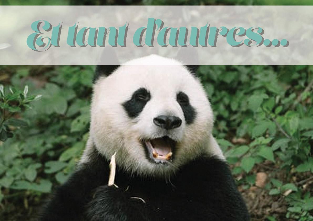 logo_animal_autres