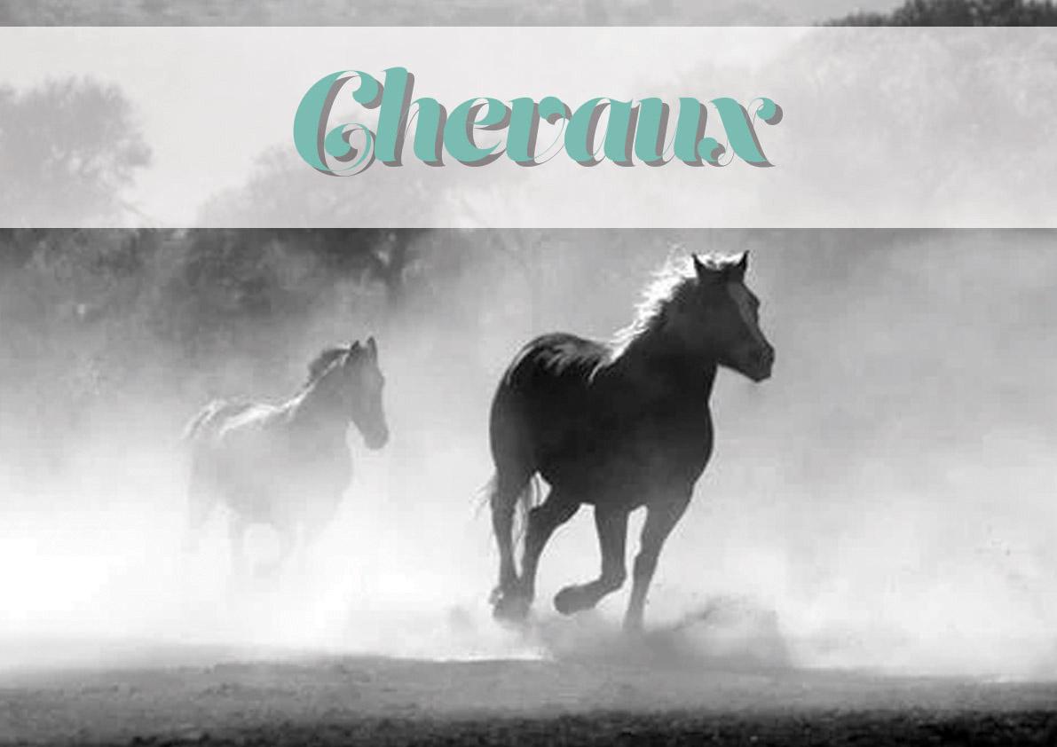 logo_animal_chevaux