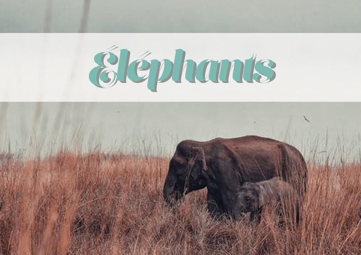 logo_animal_éléphants