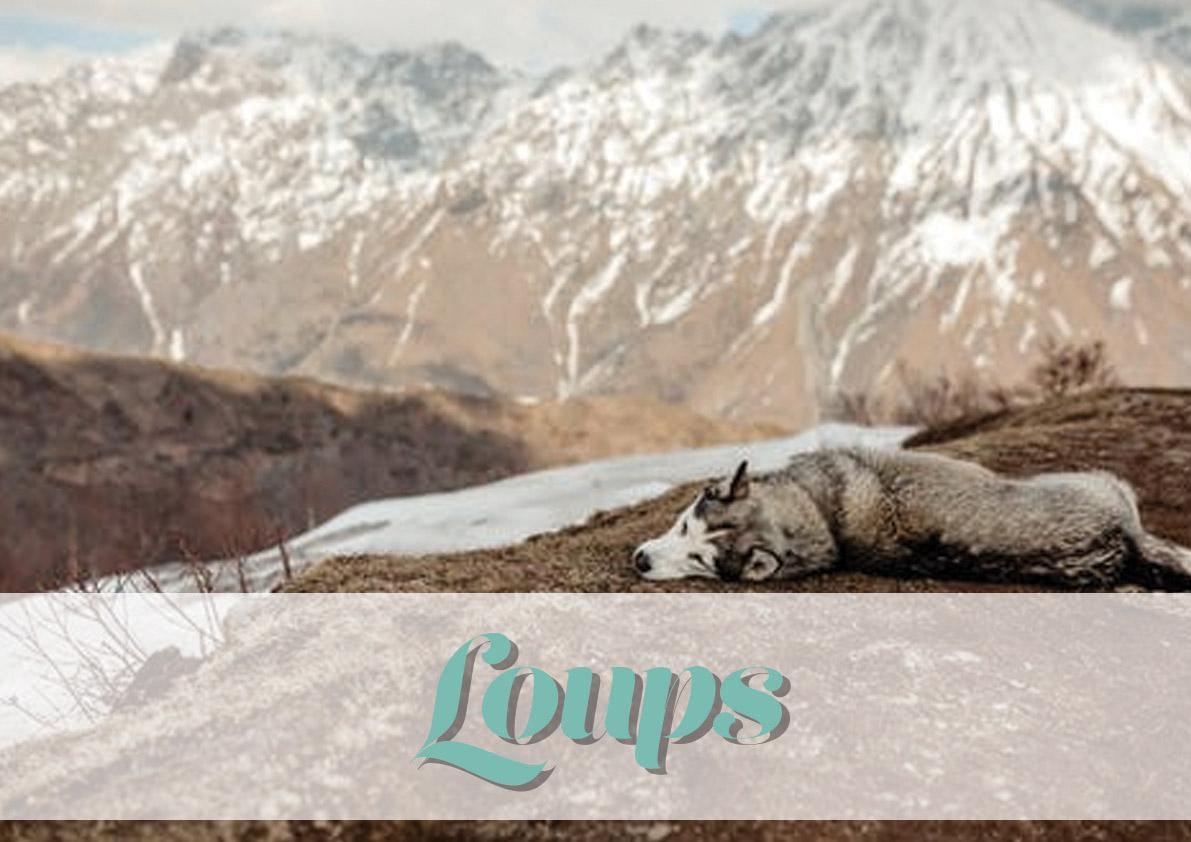 logo_animal_loup