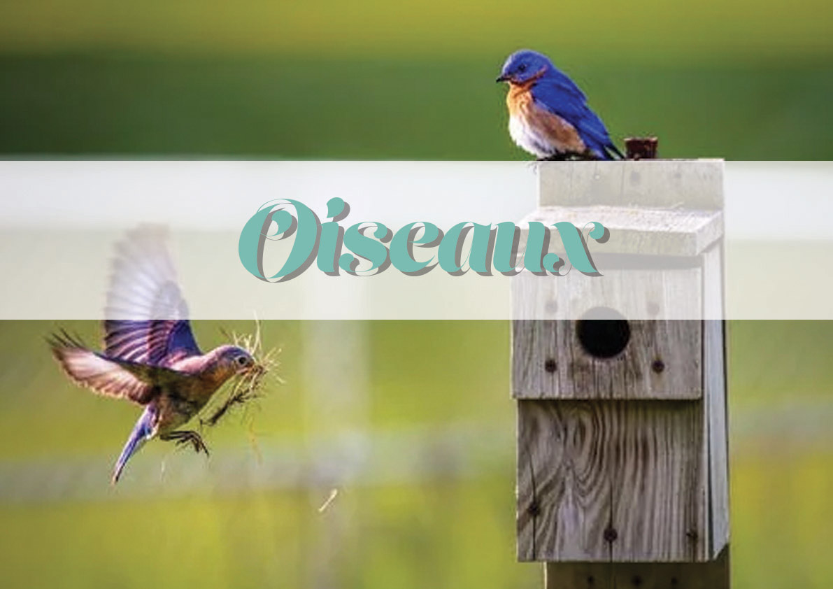 logo_animal_oiseaux