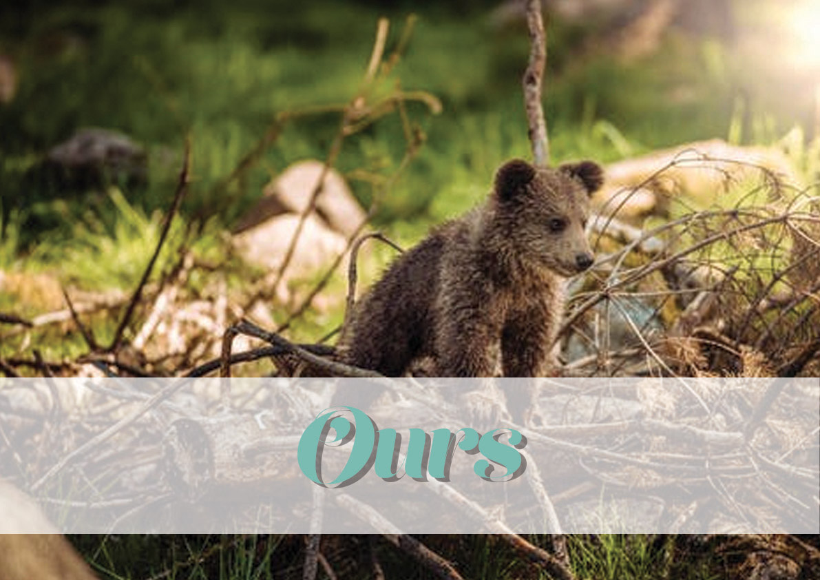 logo_animal_ours